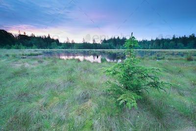 sunrise on wild forest lake