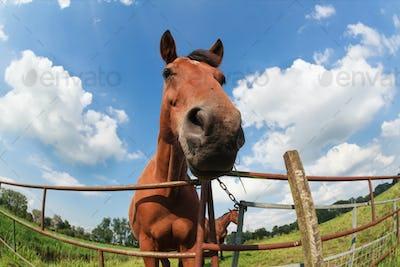 horse snout close up outdoors