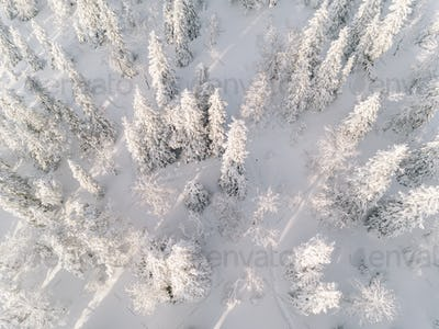 Winter forest with frosty trees, aerial view. Finland