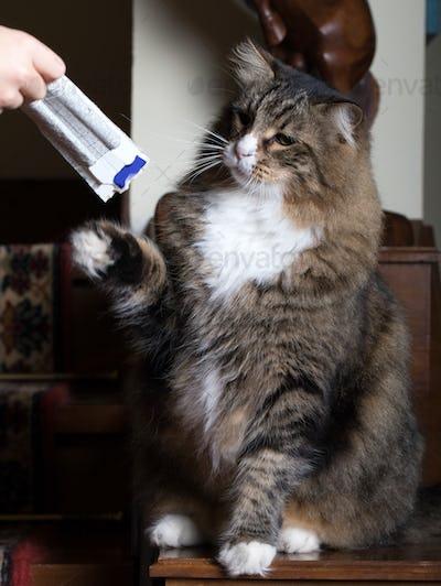 Reaction At Cat Food