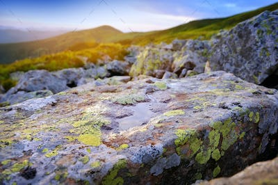Stone with colored lichens and water in the morning rays in the