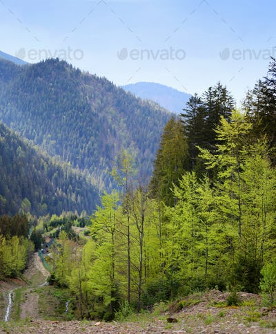Mountain landscape with the mixed forest on hillside. Spring tim