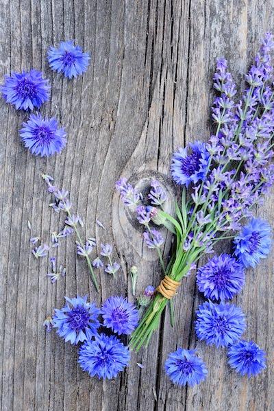 Flowers of lavender (Lavandula) and cornflower (Centaurea cyanus
