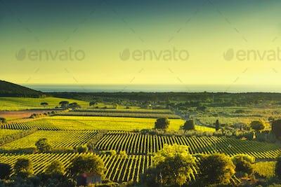 Bolgheri and Castagneto vineyard aerial view on sunset. Maremma
