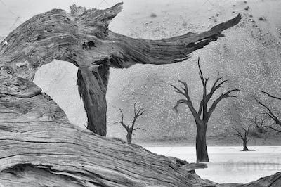 Tree skeleton at Deadvlei. Monochrome