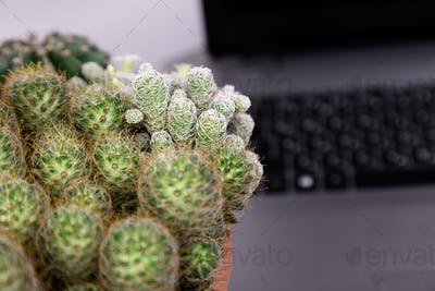 Flat lay of cactus and laptop computer