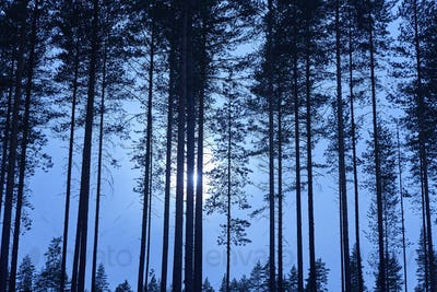Finnish landscape with forest and moon by night. Finland environment