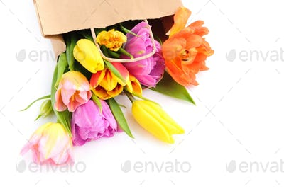 Fresh colorful tulip flowers in paper bag on white background