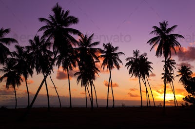 Palm Trees And Colorful Sunset, Antigua