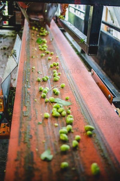 Conveyor with hop