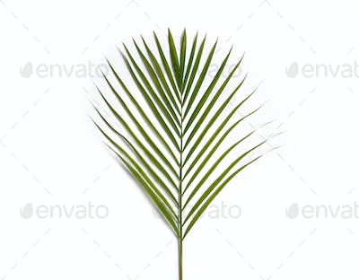 green tropical leaves of palm tree