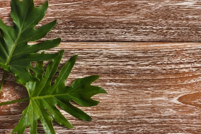 exotic tropical leaves on wooden background
