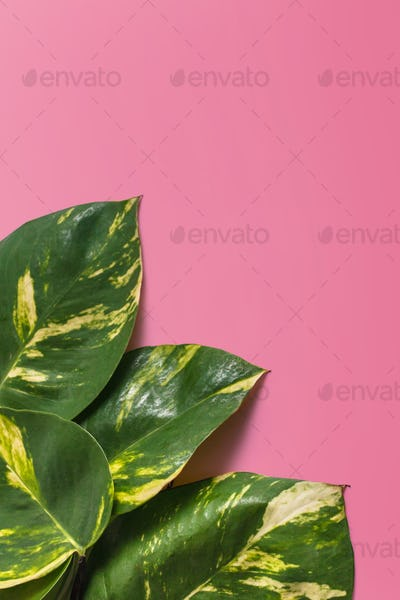 Creative tropical green leaves layout