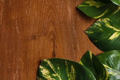 tropical leaves layout on wooden background