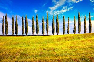 Tuscany, Cypress Trees row countryside landscape, Italy, Europe.