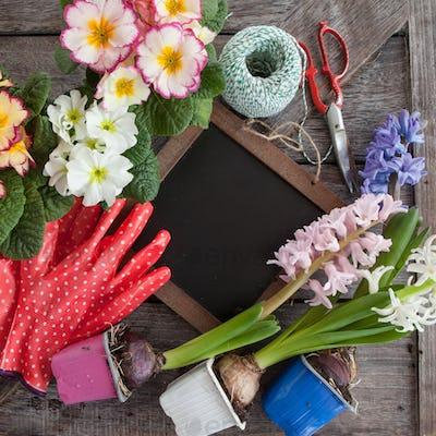 Spring flowers for gardening