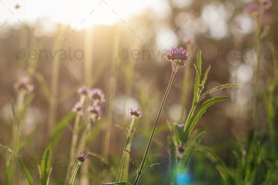flowers with nature at sunlight