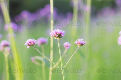Purple flowers with green background