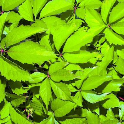 Background fresh herbs minimal style nature