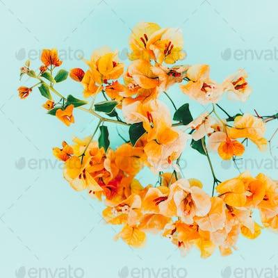 Yellow flowers. Tropical style. Minimal art