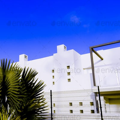 Tropical Urban minimal art. Palm tree and white location