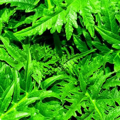 Background greens Minimal style