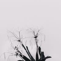 Modern art. Plant lovers. Flower. Black and white mood minimal c