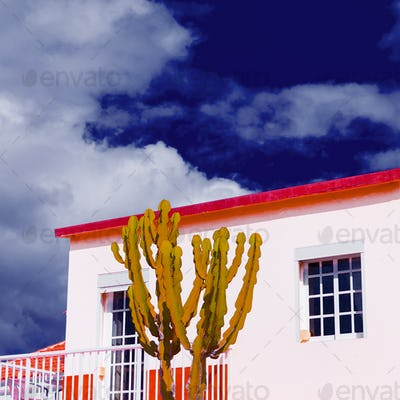 Cactus in a tropical location. Minimal design