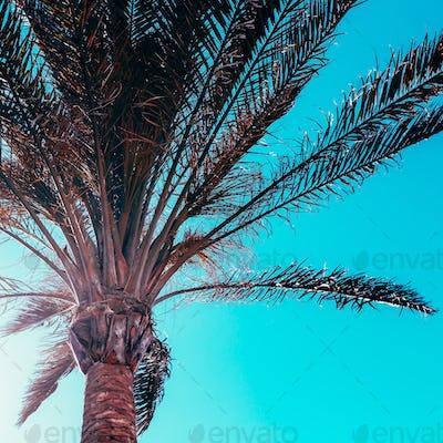 Palm background. Minimal