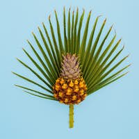 Pineapple and palm leaf. Vacation concept. Minimal art