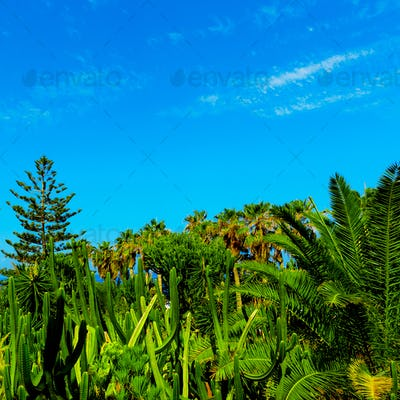 Tropical background. Palms and cacti. Canary Islands