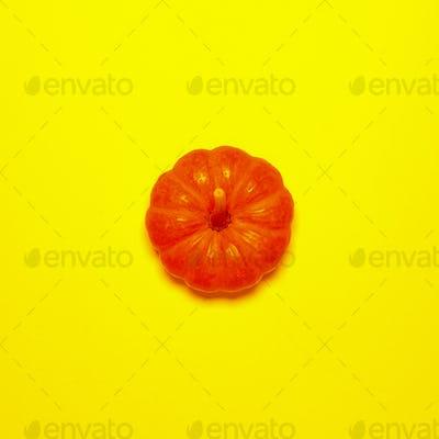 Little pumpkin on a yellow background Minimal style