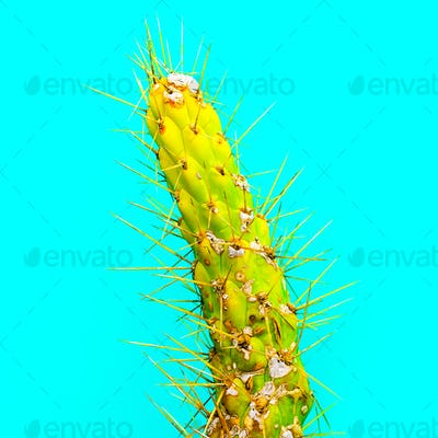 Green cactus. Minimal fashion art gallery