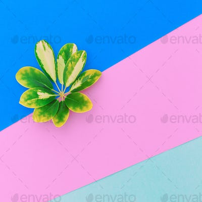leaf of a plant. Minimal art design