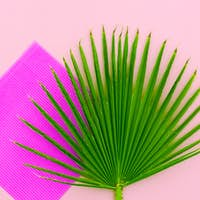 Palm leaf. Minimal Tropic Style