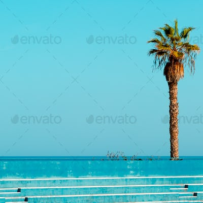 Palma in the location. Tropical minimal.