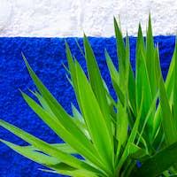 Plant  of the wall   Greens minimal art design
