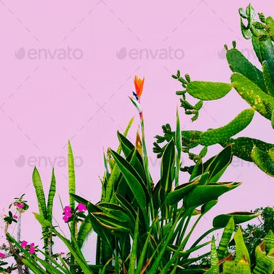 Plant on pink. Outdoors. Minimal fashion design. Plants lover. G