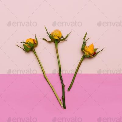 Minimal creative design. Rose without petal pastel background. A