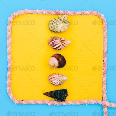 Set shells framed Beach Marine style. Minimal