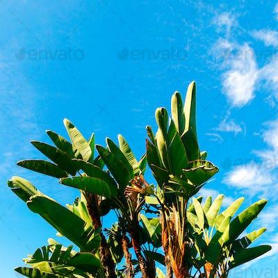Palma in the blue sky. Fashion print. Travel Minimal art