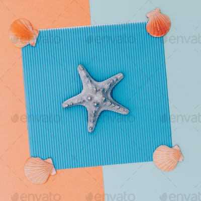 Set shells. Minimal. Sea vibes Candy colors design