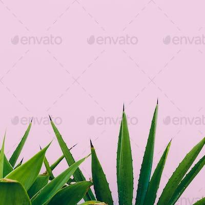 Plant o pink. Outdoors. Minimal design. Fashion for prints