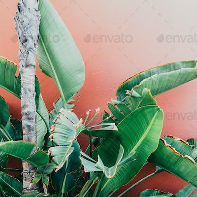 Tropical greens on a pink. minimal art design Fashion photo prin