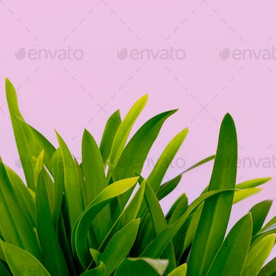 Modern art. Plant lovers. Plant on pink. minimal ideas