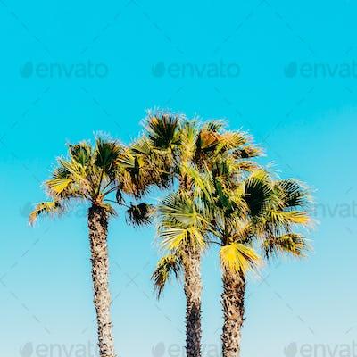 Palms. Canary Islands. Minimal