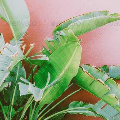 Palm tree on the pink. tropical fashion photo print.