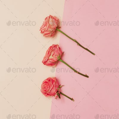 Minimal creative design. Rose on pastel background. Art Help