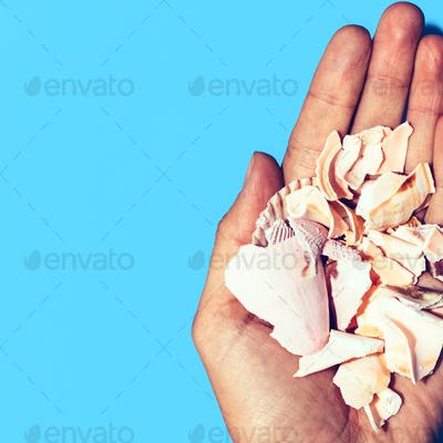 Fragments shell in the hand Minimal art design