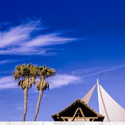 Tropical mood. Palms and location. Minimal Fashion